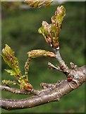 SX8963 : Oak leaves and ladybird by Derek Harper