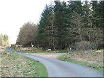 NX4095 : Carrick Forest Drive by Iain Russell