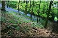 SK4338 : Bluebells in Ockbrook Wood by David Lally