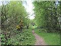 SJ7965 : Looking down the bridle path by Jonathan Kington