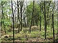 SJ7965 : Northern boundary  of Brereton Heath Country Park by Jonathan Kington