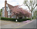 TQ1981 : Block of flats with cherry blossom, Monks Drive by David Hawgood