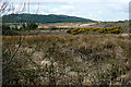 R1974 : Scrubland at Reanagishagh by Graham Horn