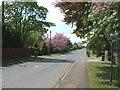 SE7649 : Sutton Lane towards Sutton upon Derwent by JThomas