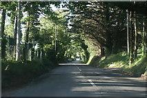 O1326 : Stocking Lane by Sarah777