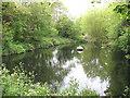 TQ4577 : Slade Pond by Stephen Craven