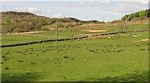 NR8261 : Improved land, Redhouse by Richard Webb