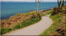 J4682 : The North Down Coastal Path near Crawfordsburn by Albert Bridge
