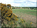 TF6723 : Woodgappe Plantation by Richard Humphrey