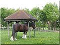 TQ4181 : Newham City Farm (2) by Stephen Craven