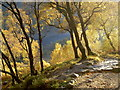 NN1762 : Golden birches on the West Highland Way by Alan Reid