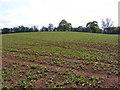 SO7988 : Murdeford Field by Gordon Griffiths