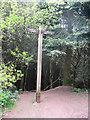 SO9975 : Finger Post at Lickey Hills by Jonathan Barber