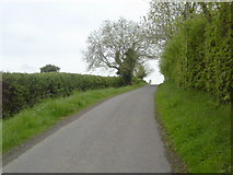 N9346 : Country Road, Co Meath by C O'Flanagan