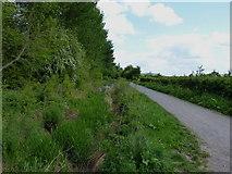 SJ5114 : NCN Route 81 east of Shrewsbury by Richard Law