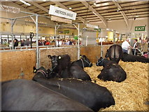 SX9891 : Westpoint : Devon County Show 2010 - Westpoint Arena by Lewis Clarke