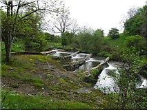 H6357 : Cascading water, Ballygawley River by Kenneth  Allen