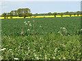 TF8522 : Fields east of Weasenham by Evelyn Simak