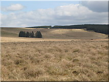 NY5775 : Panorama from the cairn north of Borderrigg (17: ENE - Black Moss) by Mike Quinn