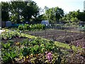 SP2760 : Allotments, Wasperton Lane, Barford by David P Howard