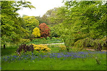 TQ4745 : Woodland Garden at Hever Castle, Kent by Peter Trimming