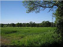 SP2375 : Field of barley by Holly Lane by Robin Stott