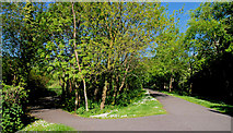 J4774 : Spring path, Kiltonga, Newtownards by Albert Bridge