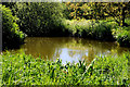 J4774 : Pond and vegetation, Kiltonga, Newtownards by Albert Bridge