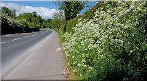 J4774 : The Belfast Road, Newtownards by Albert Bridge