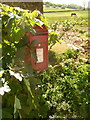 ST6104 : Batcombe: postbox № DT2 28 and a horse by Chris Downer