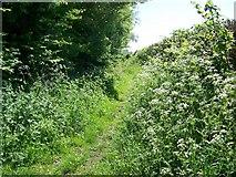 SU4356 : Bridleway near Crux Easton by Maigheach-gheal
