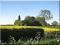 SK8159 : Wood near Langford by Jonathan Thacker