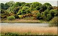 J3758 : Lisbane Lough near Saintfield by Albert Bridge