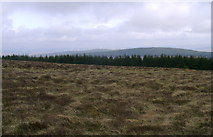 NS7433 : Moorland south of the summit of Nutberry Hill by Mark Nightingale