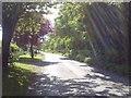 N8956 : Country Road, Co Meath by C O'Flanagan