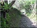 SN1735 : Ancient trackway ? by Derek Voller