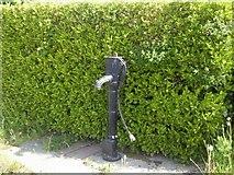 N9252 : Pump, Co Meath by C O'Flanagan