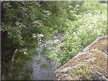 N8554 : Boycetown River, Milltown, Co Meath by C O'Flanagan