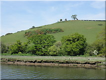 SX8158 : Ruined building on the hillside, above the River Dart by Roger Cornfoot