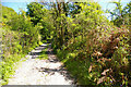 SR9594 : Pembrokeshire Coast Path by Roger Gittins