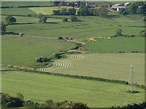 ST3857 : Lines of mown grass by the Lox Yeo by Derek Harper