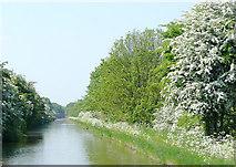 SJ8316 : Shropshire Union Canal near Little Onn, Staffordshire by Roger  Kidd
