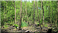 SJ7965 : Wet woodland by Jonathan Kington