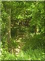 TR0435 : The Saxon Shore Way enters Park Wood by David Anstiss
