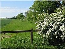 NT4165 : Field edge near Dodridge Farm by M J Richardson