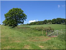 SS7401 : Gate and field boundary by the Two Moors Way by Derek Harper