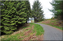 NY6491 : Looking along the track at Kielder Water by Nicholas Mutton