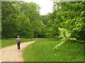 ST8389 : Oak Avenue, Westonbirt Arboretum by Colin Smith