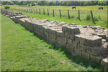 NZ1366 : Hadrian's Wall by Stephen McKay