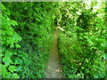 SU3443 : Anna Valley - Bury Hill Fort by Chris Talbot